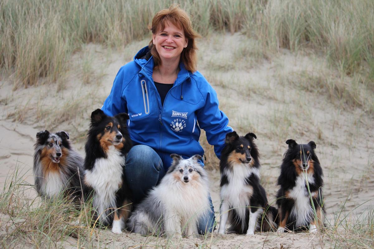 Shetfield, Shetland Sheepdog